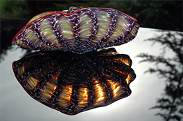 Barnacle Art Glass Nesting Sets by Robert Kaindl